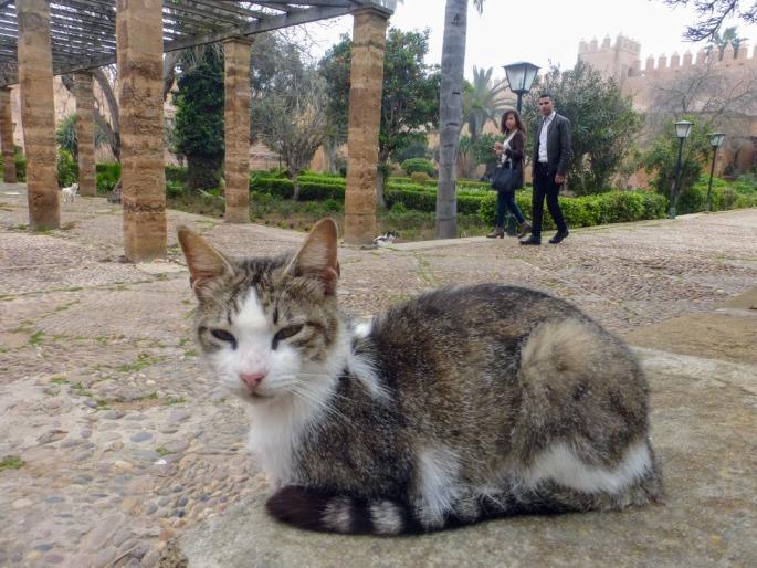 kot-w-ogrodzie